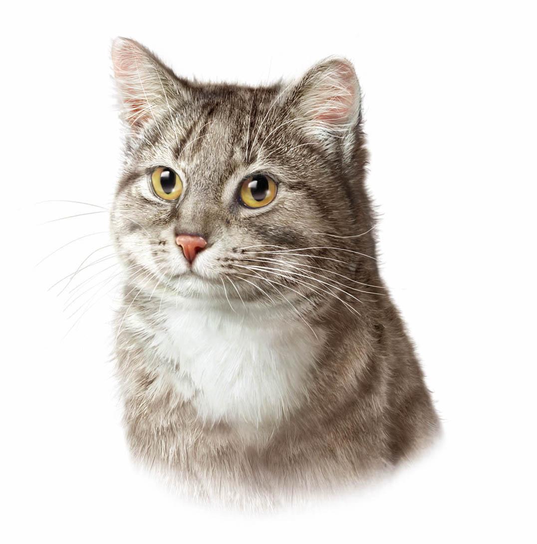 Gatto portrait