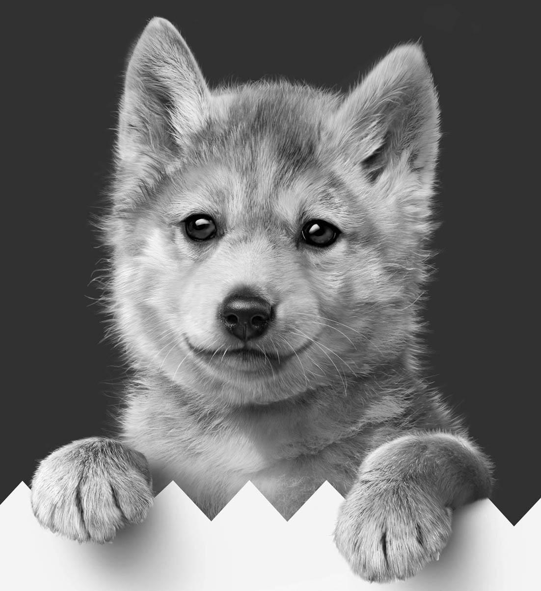 Wolf Junior